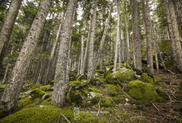 Bosc de Gerdar
